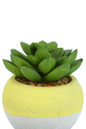 Cacti Potted Plant - 8 cm