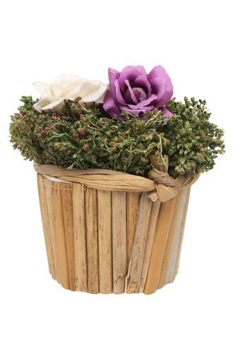 Rose Buds In Bamboo Planter