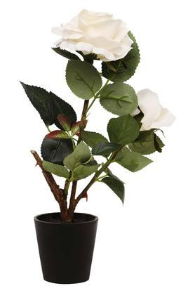 IVY Decorative Potted White Rose