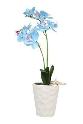 Blue Orchid Potted Plant Arrangement