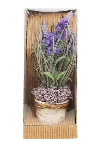 Lavender Mix in Gift Box