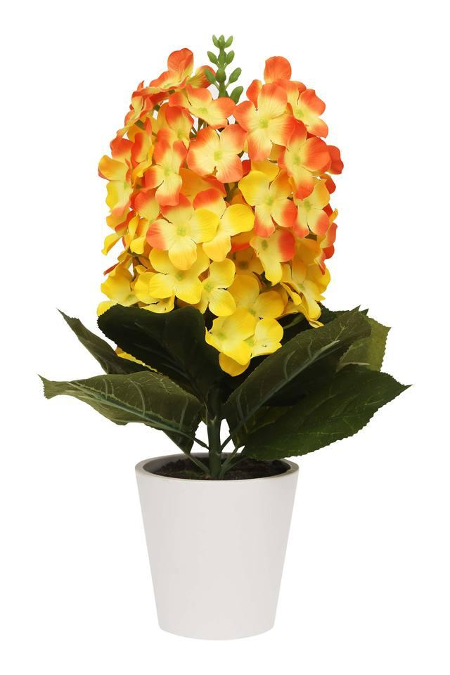 Yellow Hydranges Potted Plant