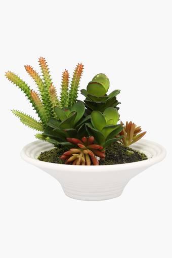 Cacti Mix Arrangement