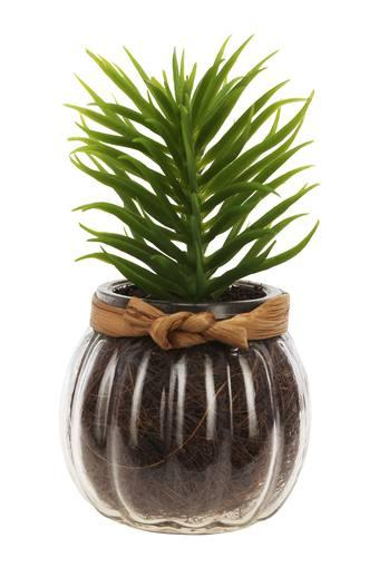 Cactus in Spherical Glass Pot Plant