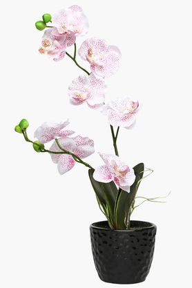 White-Pink Orchid Potted Plant