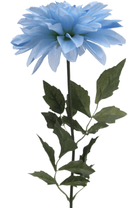 IVY Blue Single Dahlia Stem - 65 Cm