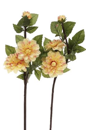 IVYDahila Flower Stem