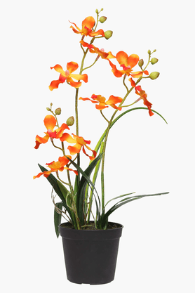 Orange Orchid Potted Plant