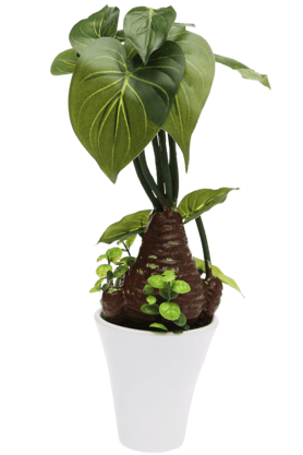 IVY Green Potted Plant