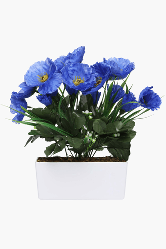 Blue Poppy Potted Plant