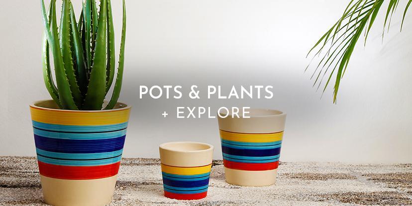 Pots-&-Plants-